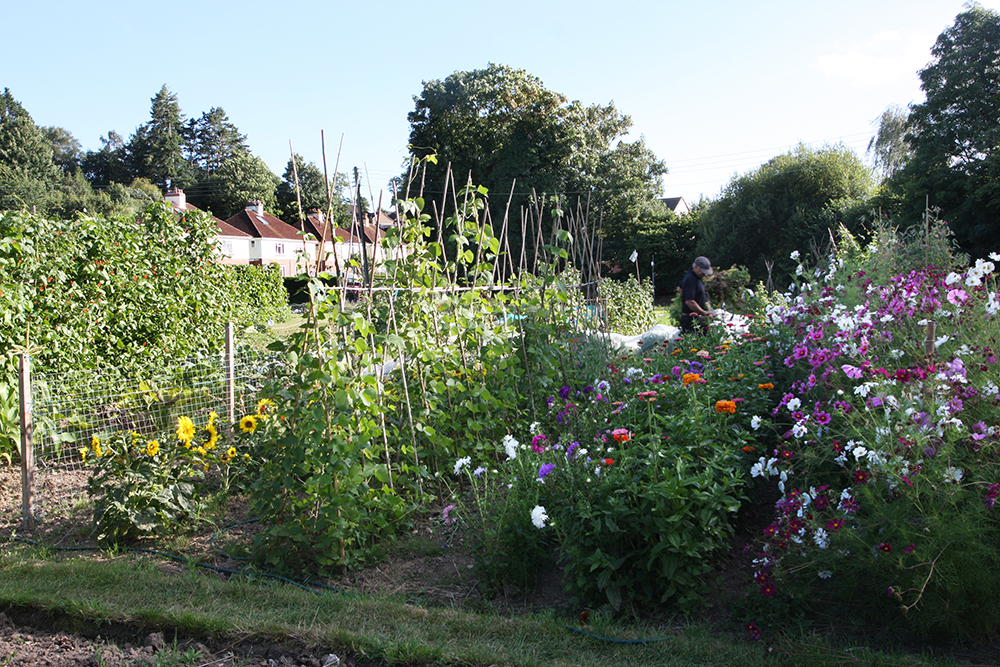 allotments 1.jpg